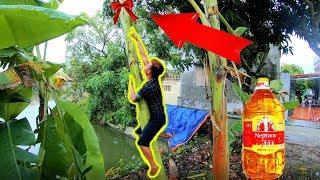 PHD   Thử Thách Leo Cây Chuối Dầu Ăn   Climbing Banana Trees