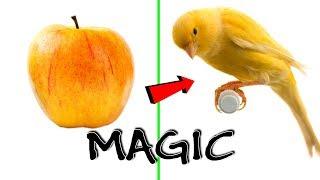 BEST Satisfying Zach King Magic Tricks 2019   Oddly Satisfying Zach King Magic Vines