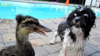 PREPARE YOURSELF to LAUGH ALL DAY LONG! - Best FUNNY DOG VIDEOS