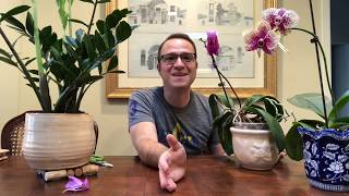 Where To Cut Orchid Stem After Flowers Fall Off!
