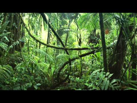 Jungle - Rytmik World Music Song by Jake B.