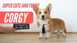 The Best of Funny and  Super Cute Corgis 2019 - Part #1