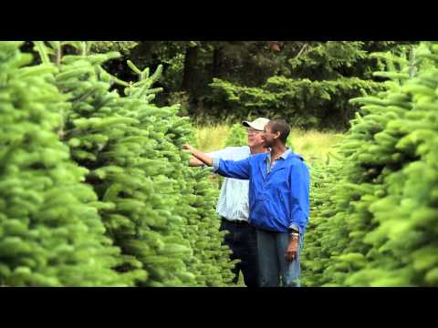 KLM Christmas Tree Farm