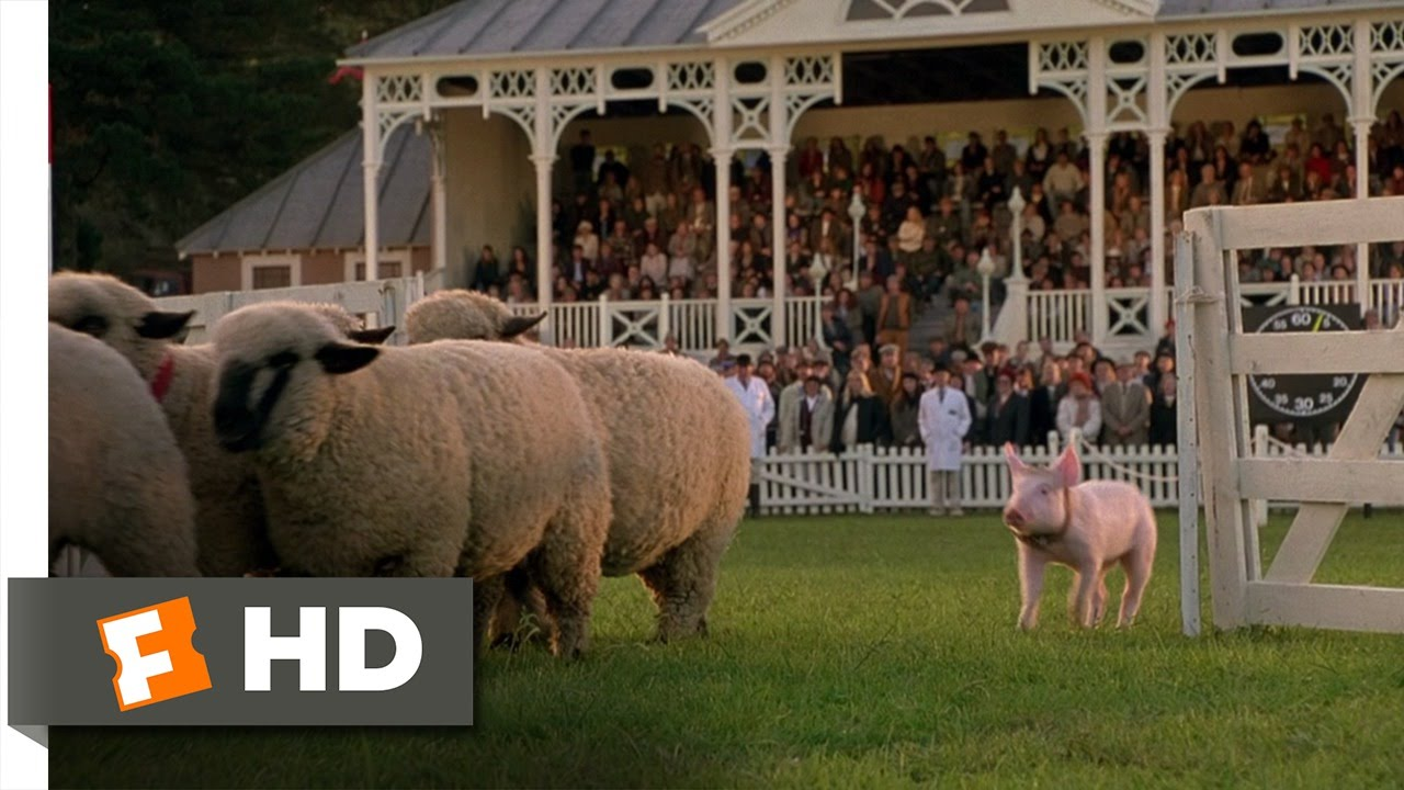 Babe 8 9 Movie Clip The Sheep Pig 1995 Hd Youtube