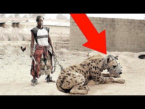 5 Самых Опасных Домашних Животных в Мире