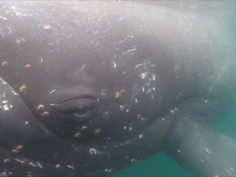 Raw: Scientists Study Whales in Antarctica