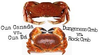 Cua Canada đấu với Cua Đá - Dungeness and Rock Crabs Mukbang