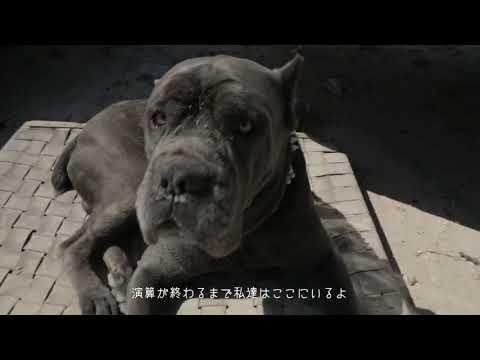 犬も歩けばボーアモデル ドッグフード買い太郎 MV