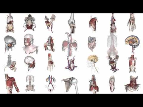 Primal Pictures 3D Real-time Human Anatomy