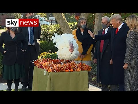 US Election: Lame duck President Trump pardons one lucky turkey for Thanksgiving