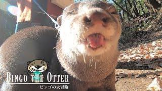 カワウソ ビンゴの大冒険in公園(パート1)Otter Bingo's great adventure Pt.1