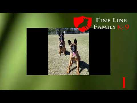 Best Protection Dogs by Fine Line Family K 9