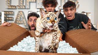 A Fan Sent Us A Cat (Fan Mail)