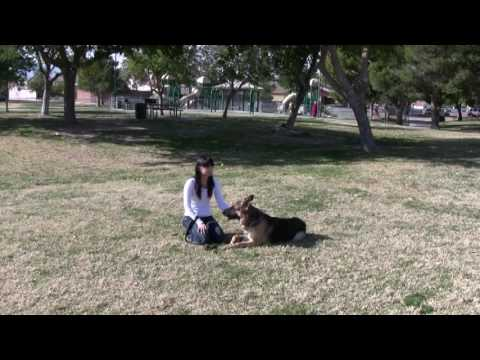 Testimonial for Southern Nevada K9 Training