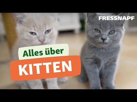 Alles über Kitten & Schwangerschaft bei Katzen