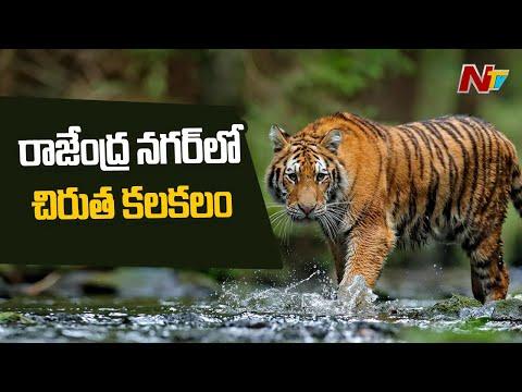 Leopard creates panic in Rajendra Nagar, Hyderabad