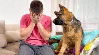 German Shepherd Puppy Reaction to Me Crying