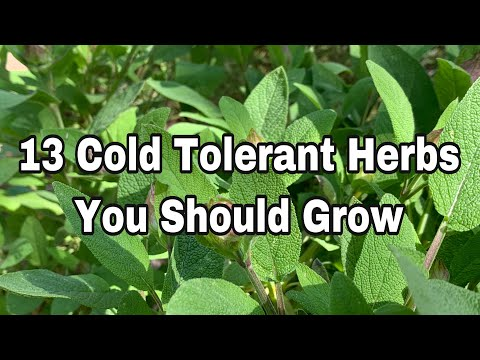 13 Cold Hardy Herbs You Can Grow