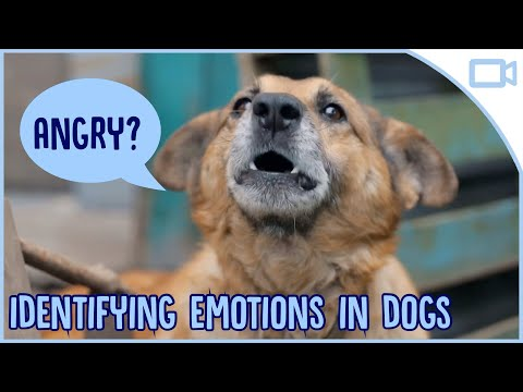 How to Identify Emotions in Your Dog!