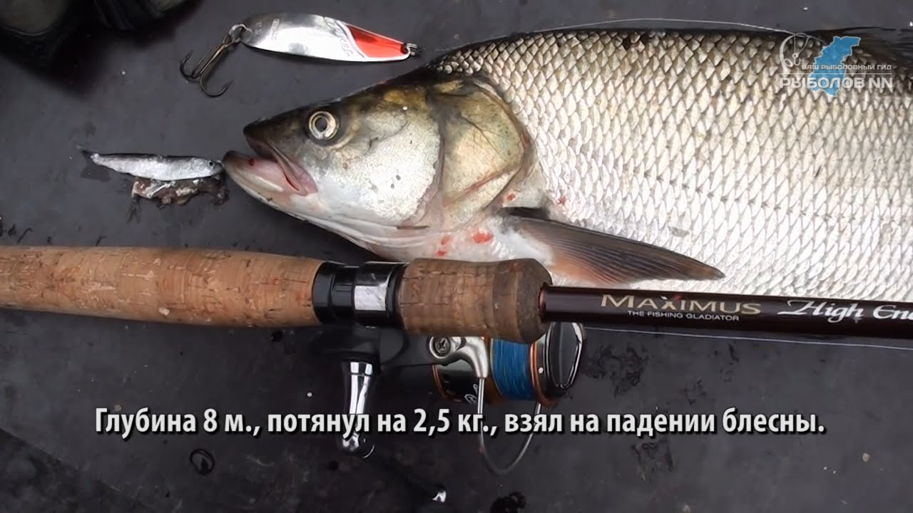 Ловля хищной рыбы на спиннинг видео