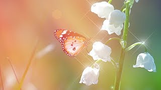 """Peaceful music, Relaxing Music, Instrumental Music """"New Serenity"""" by Tim Janis"""