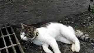 かご猫20