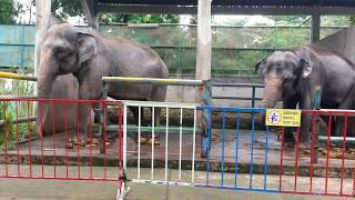 Vườn thú Đầm Sen tháng 6.2018   Zoo in Dam Sen Park