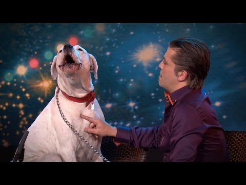 """Куче настапи на """"Белгија има талент"""" со хитот на Витни Хјустон """"I Will Always Love You"""""""