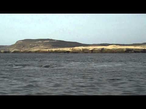 Whale watching Puerto Piramides