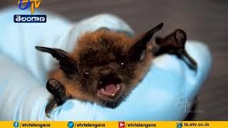 ICMR study finds presence of 'Bat Coronavirus' in two Indi..