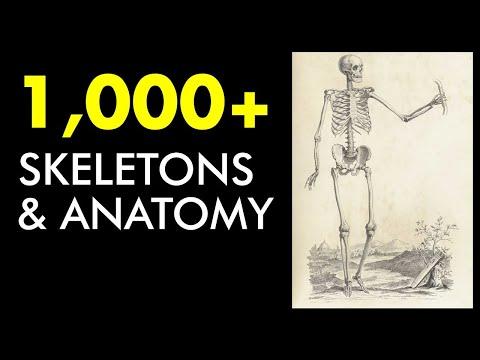 PUBLIC DOMAIN Skeletons& Anatomy Illustrations