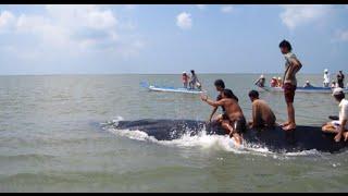 Cưỡi cá voi xanh khổng lồ - cảnh tượng độc nhất vô nhị.