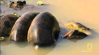 亀を丸呑み