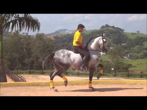 Baixar Incrível Cavalo que dança musica nova da Ivete Sangalo e Shakira!!