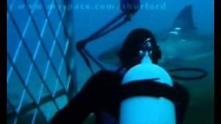 ホオジロザメ1