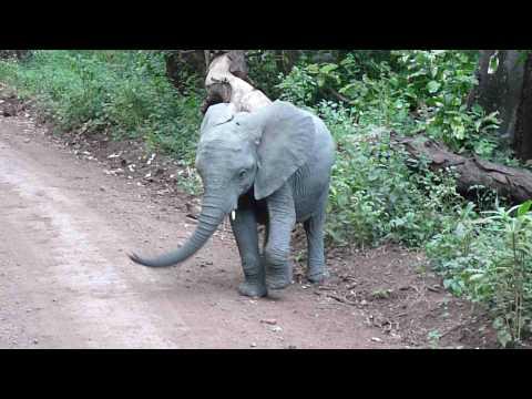 Dancing Elephant Baby
