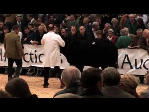 Video of United Auctions  - 150 years in livestock auctioneering