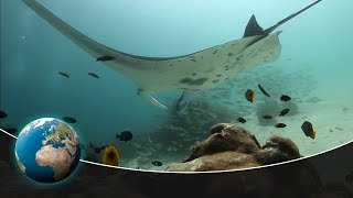 Predators of a different kind - The world of the unknown Sharks