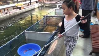 Ruby bắt cá Koi cho khách xem.