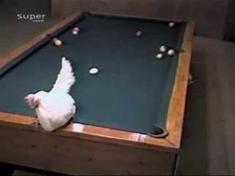 Кокошка како игра билијард