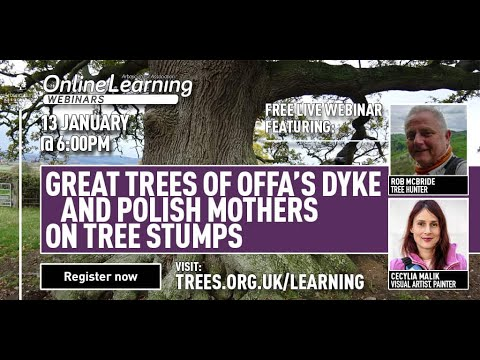 Great trees of Offa's Dyke and Polish mothers on tree stumps (with Rob McBride and Cecylia Malik)