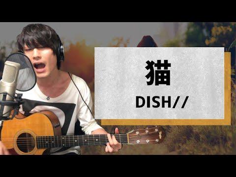 猫 / DISH//【弾き語りカバー1発録り】