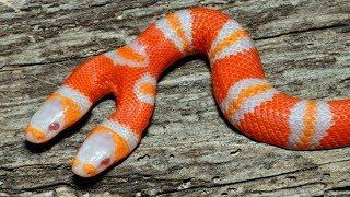 Most SHOCKING Animal Mutations Around The World!