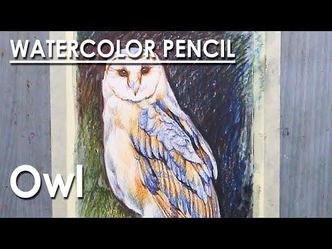 Watercolor Pencil Drawing : Owl