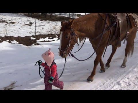 这两岁小女孩好大胆哦,竟然牵起着一只比她大好几倍的马儿..看完马儿的反应,所有人的心都被融合了