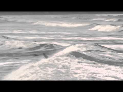 Baixar Leco Salazar Sup Wave Brasil