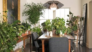 Houseplant Tour | Amanda's Living and Dining Rooms