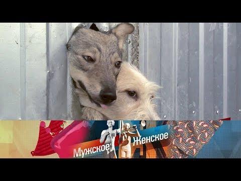 Мужское / Женское. Концлагерь для собак. Выпуск от 19.09.2018