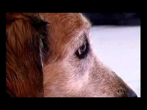 Bolesti zglobova starijih pasa