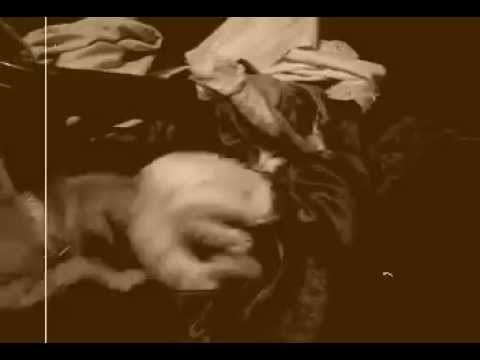 trisha krishnan nude anal sex